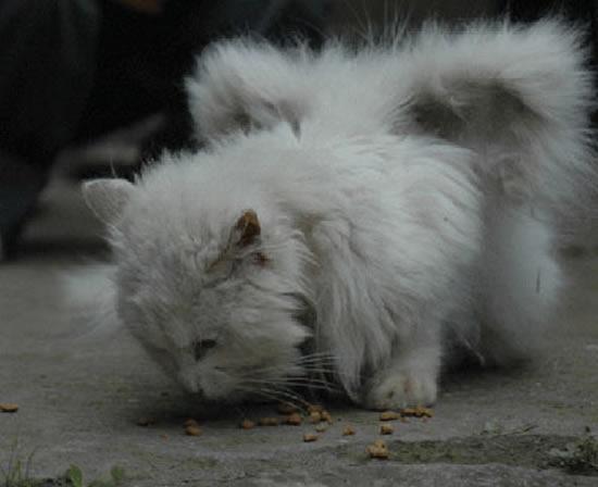 КОШКИН ДОМ. Коты с крыльями