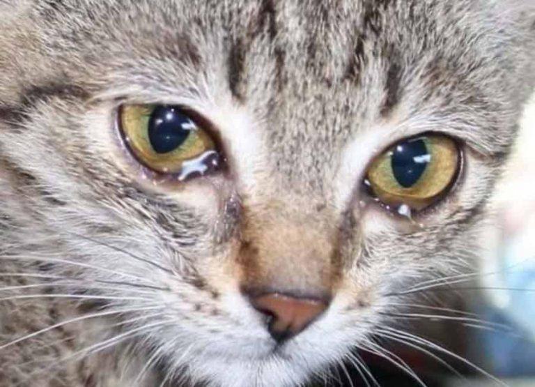 История котика Мурзика