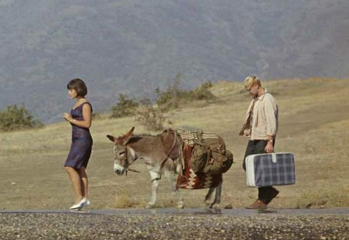 Ослик из «Кавказской пленницы» - ослица Люся животные, кино, это интересно