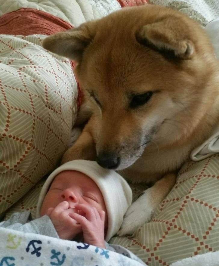 собачья преданность, преданность собаки, собаки любят своих хозяев, трогательные поступки собак