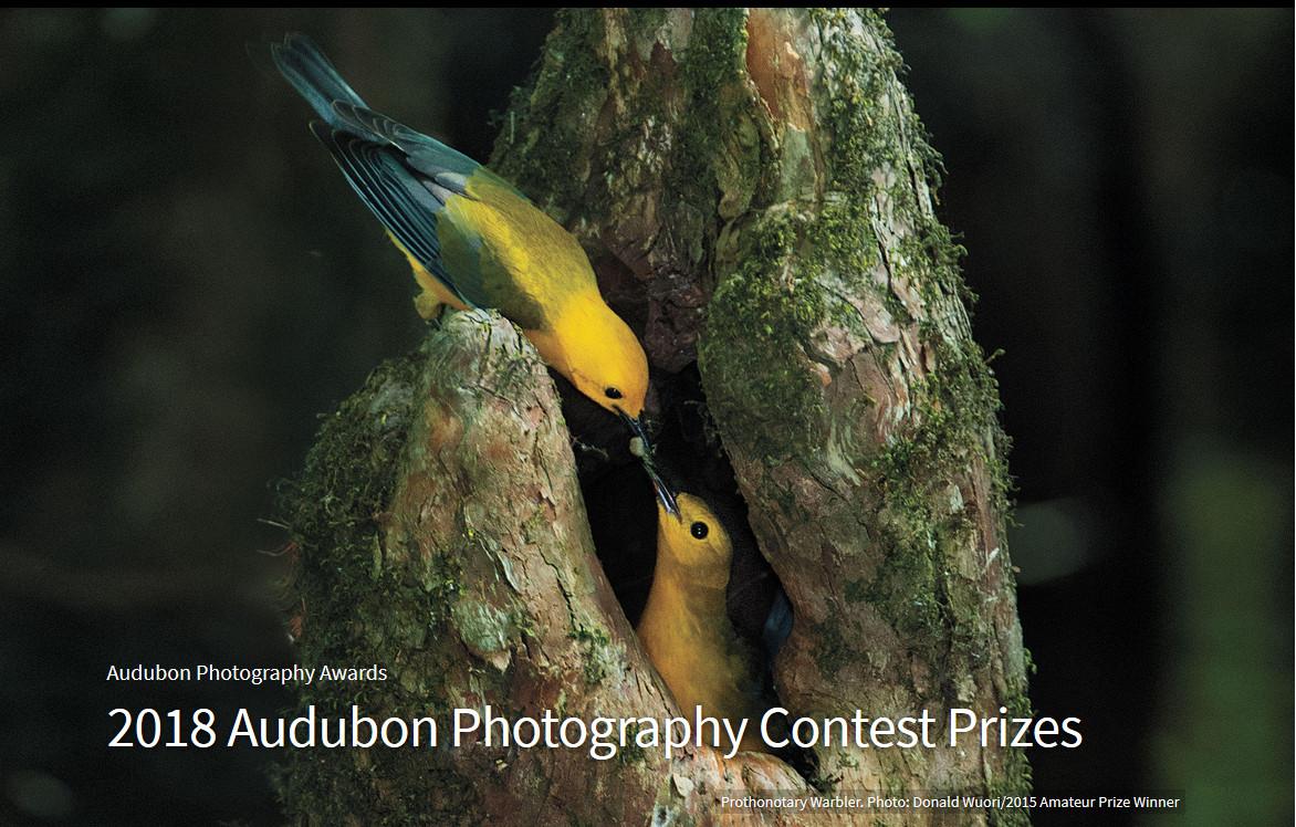 Победители птичьего конкурса Audubon Photography Awards 2018
