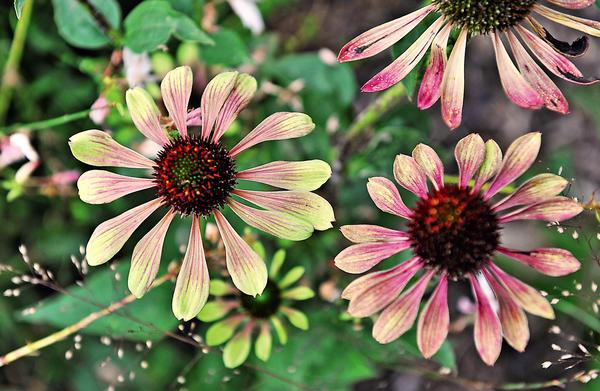 20 идей, которые сделают сад красивым