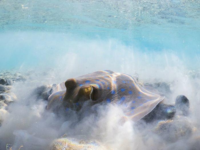 10 самых красивых фото, снятых под водой в этом году Культура