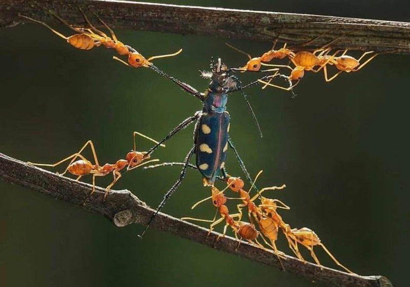 16. Четвертование по-муравьиному в мире, животные, красота, природа, удивительно, фото