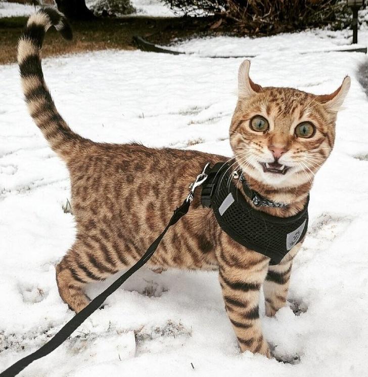 Кошки и снег
