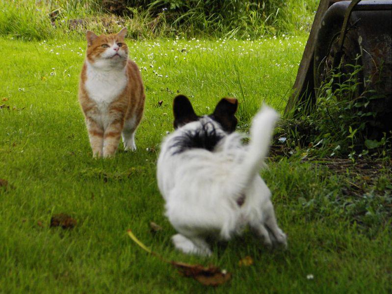 О дружбе котов и собак