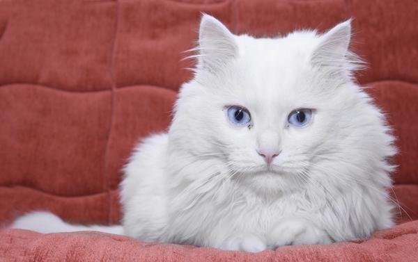 Мир глазами кошки: 7 интересных фактов