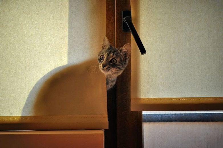 Милые кошачьи испуги (гифки)