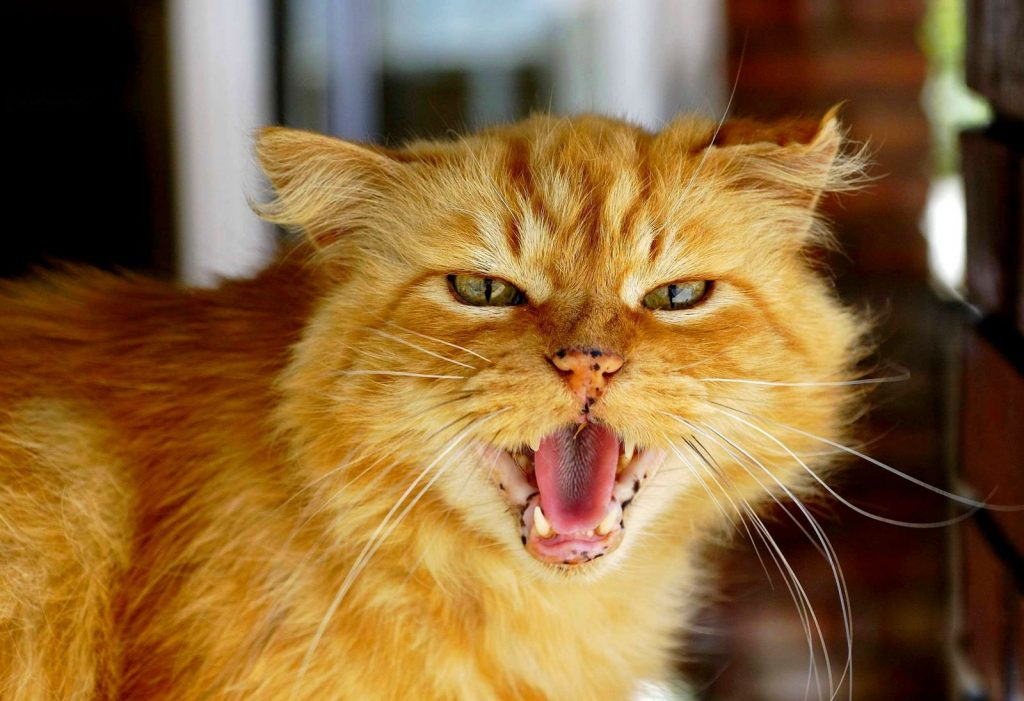 Картинки котята злятся