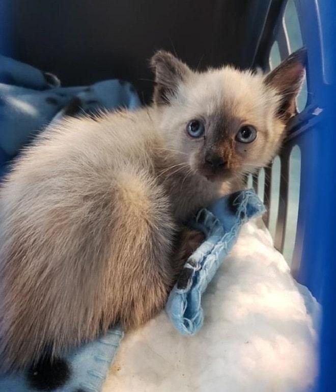 Невзирая на боль, котенок со сломанной челюстью стал поддержкой для испуганной кошки