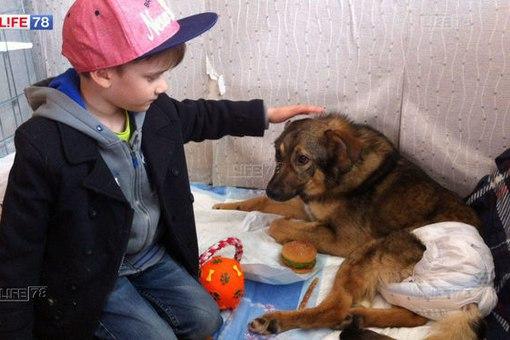 Петербуржцы отблагодарят мальчика, отдавшего сбережения раненому псу