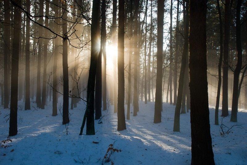 В Омской области главврач во время охоты спас замерзающую в лесу женщину