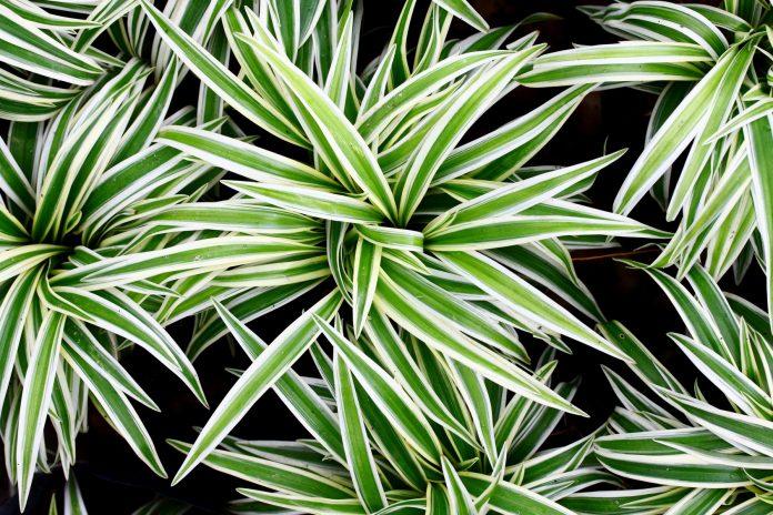 12 лучших растений для очист…