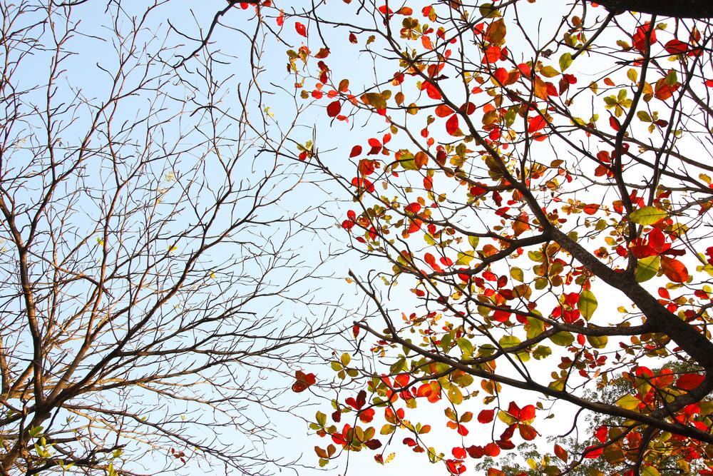 деревья с опавшей листвой картинки воспоминаний