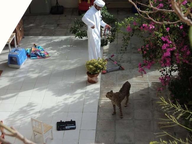 Дубай — самый безумный город на земле