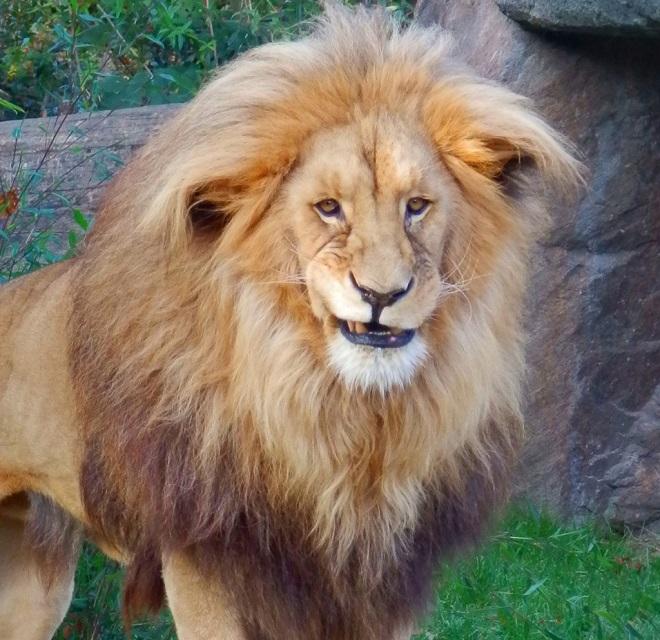 Анимашки картинки, смешные картинки на львов