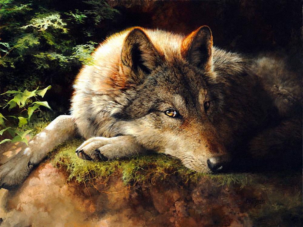 волк художник картинки