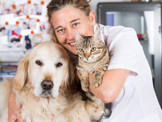 Вы кошатник или собачник? ТЕСТ