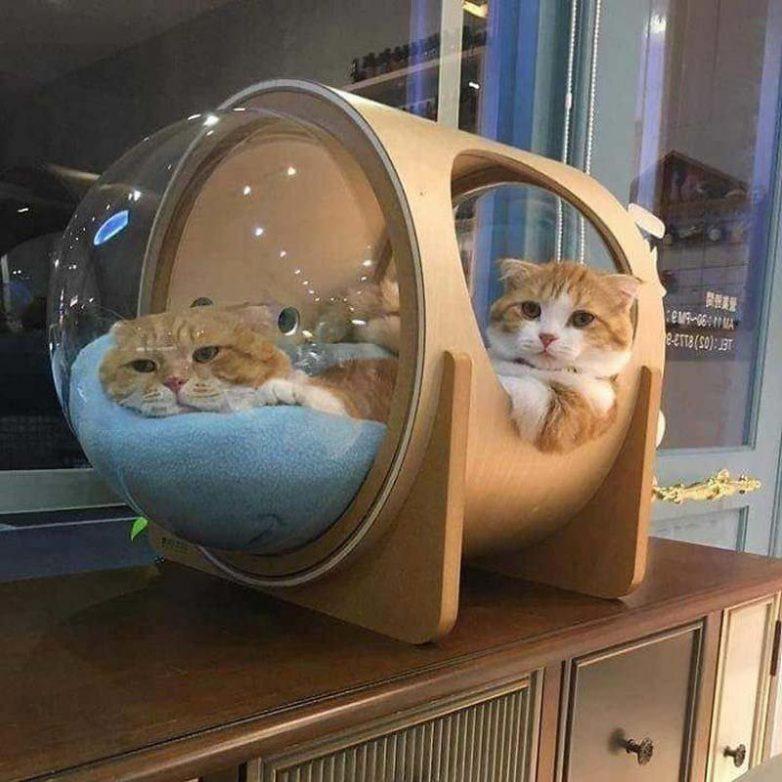 Домики для кошек животина