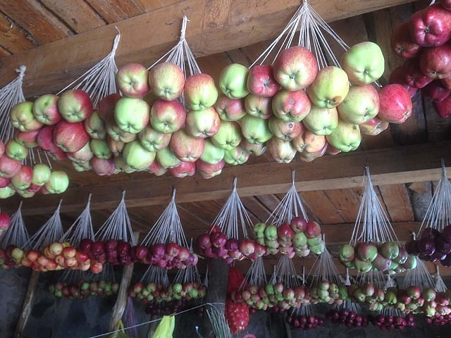 Вот так хранят яблоки на зиму...
