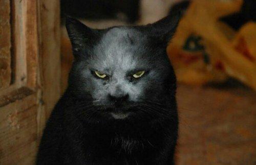 Кот-демон, фотография которо…