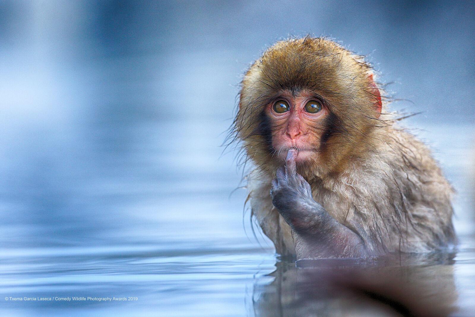 грубо говоря, лучшие фото забавных животных общем