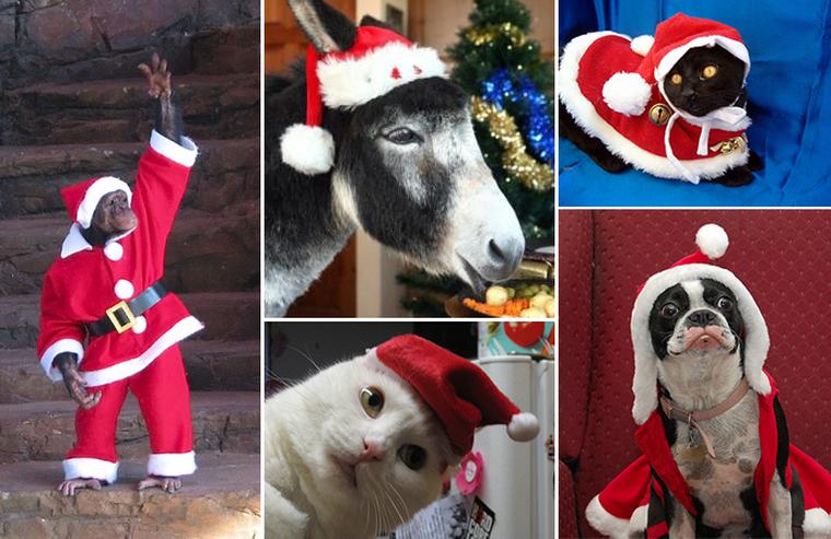 100 животных, которые уже нарядились к праздникам