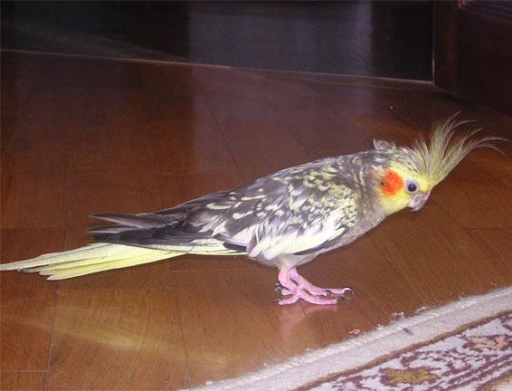 Как я хоронил попугая