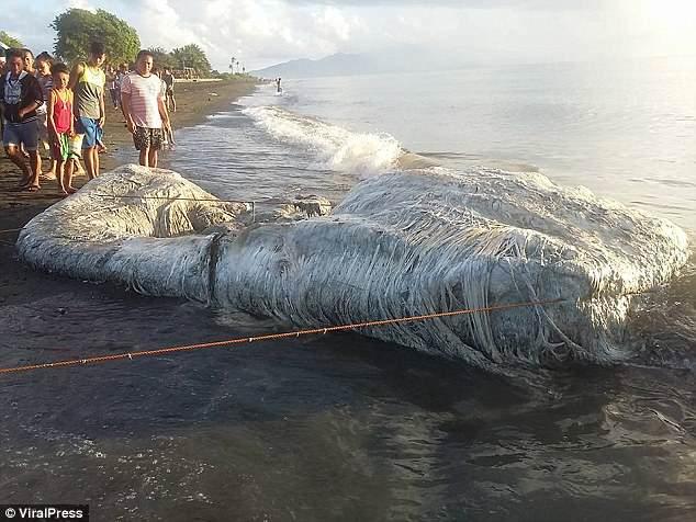 На Филиппинах заговорили о дурном предзнаменовании, когда на пляж выбросило тушу вонючего чудовища