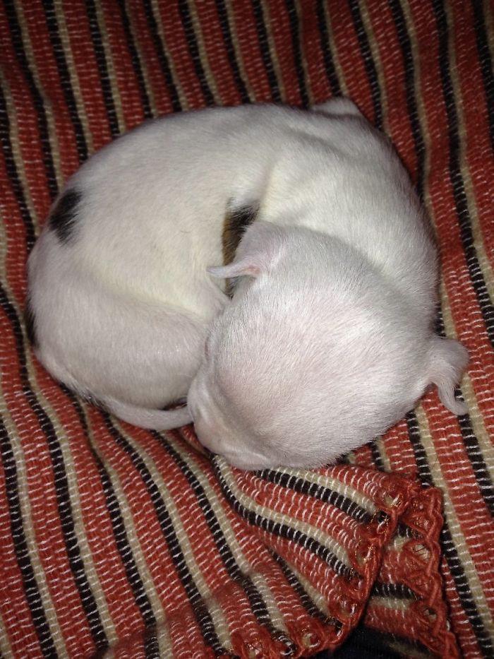К счастью, благодаря постоянной заботе людей, котов и собак Николас превратился в симпатичного пёсика! кошки, питбуль, щенок