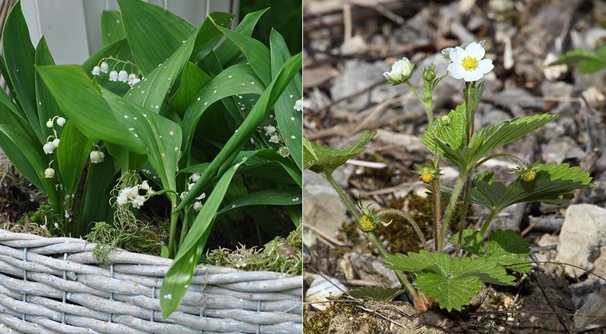 Белые цветы для монохромного сада: 50 лучших белоснежных садовых растений дача,сад и огород,садовые растения,цветоводство
