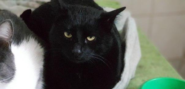 «Вася, Вася… Человеческие глазки…» Кот, которого предавали дважды, затаился в ожидании чуда