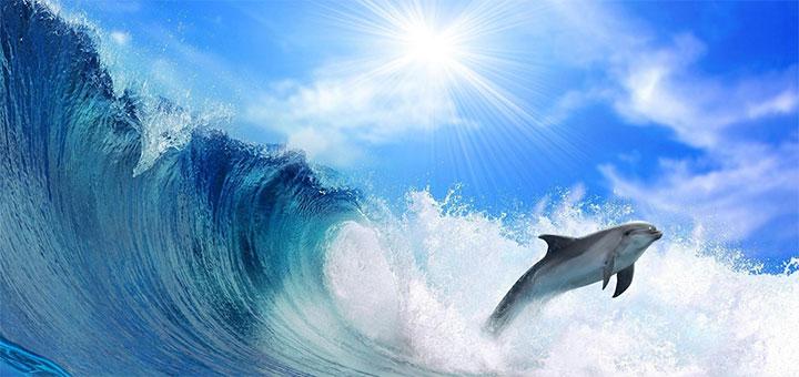 Индия признала дельфинов лич…