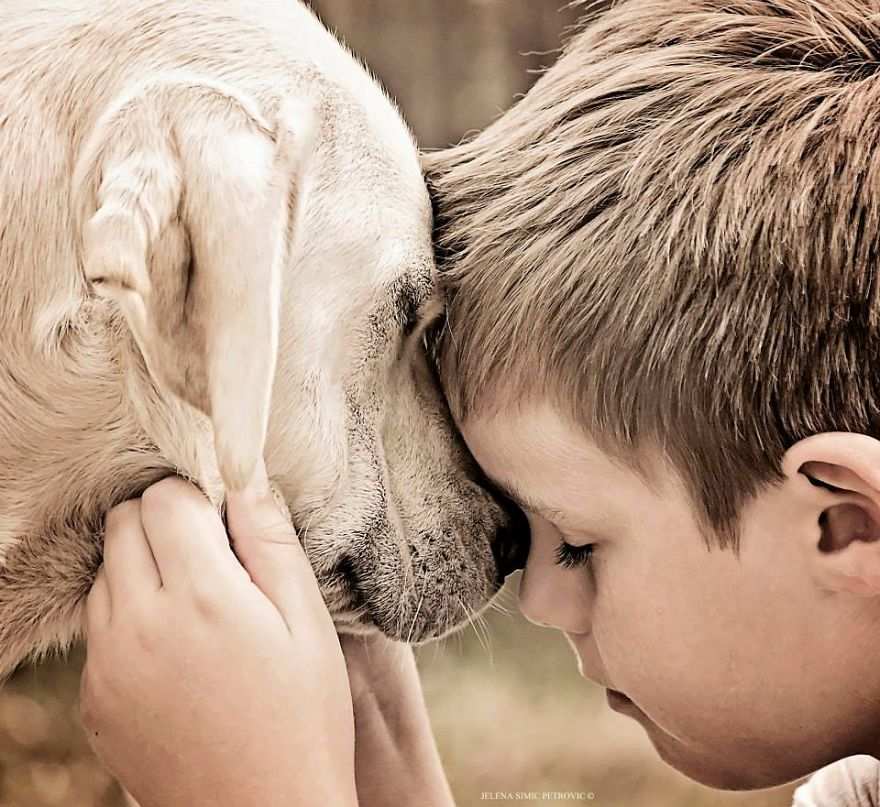 Слова мальчика, потерявшего верного друга, заставили задуматься всех взрослых