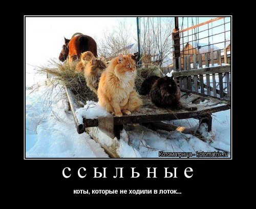Новая котоматрица (22 фото)