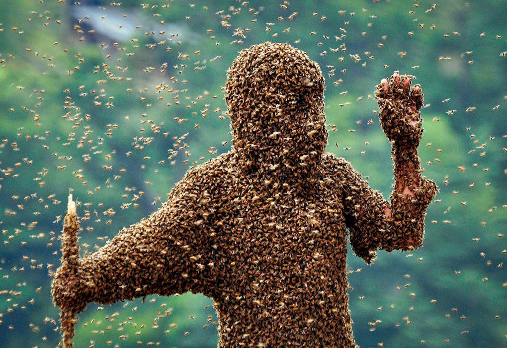 26 килограммов пчёл на одном человеке?
