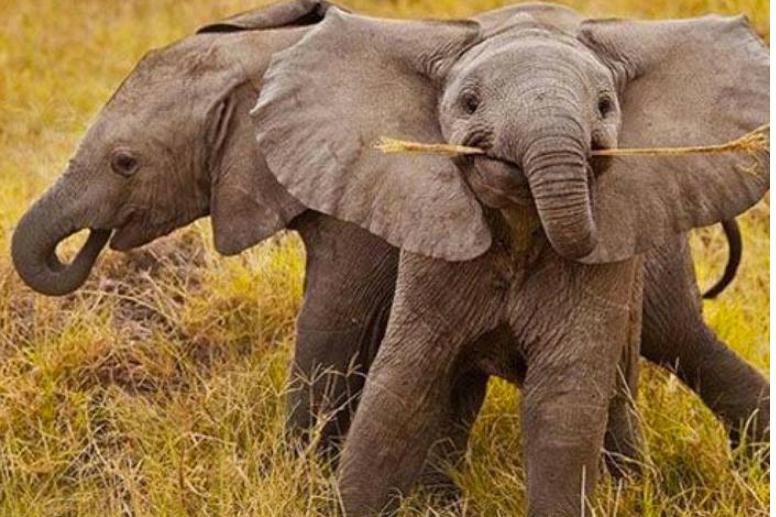 Чего ещё мы не знали о мире животных