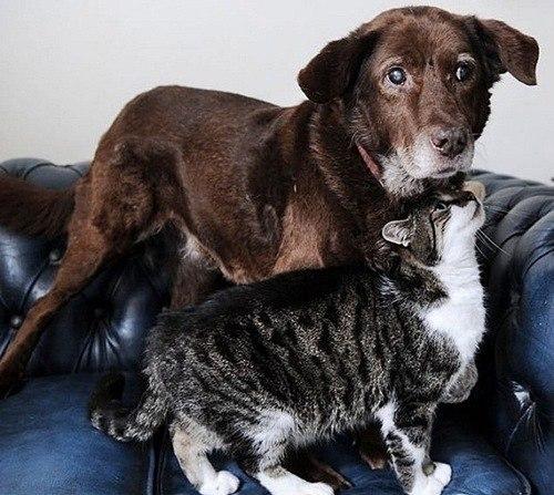 Кошка стала поводырем для сл…