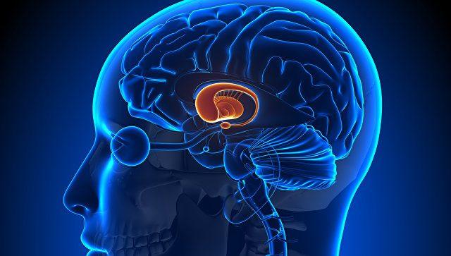 Что происходит с мозгом во время сна?