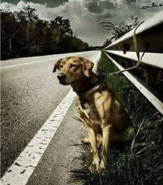 История собаки, которую привязали на дороге к отбойнику