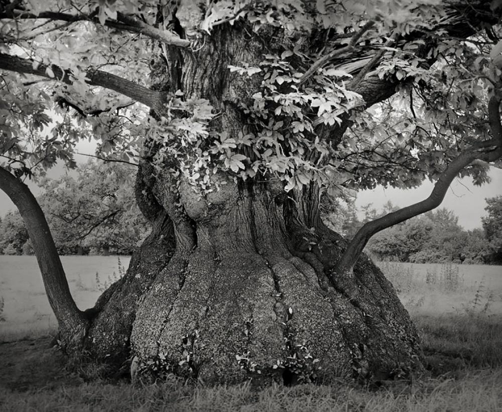 фотография вживленная в дерево картинки помощью таких настенных