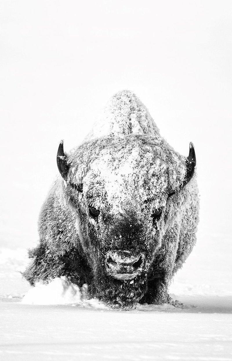 """""""Могучий дух"""", Дерек Джеррелл national geographic, конкурс, красота, природа, удивительно, фото, фотография, фотоподборка"""