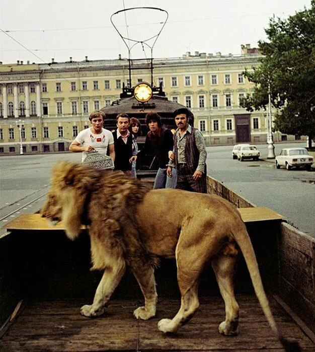 Мучения режиссёров и тоска четвероногих актёров или как снимали животных в культовых советских фильм животные, кино, это интересно