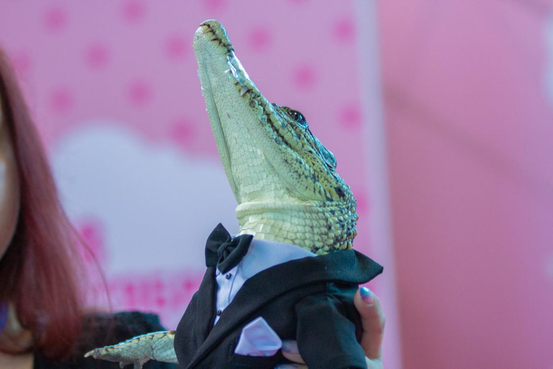 Лама-бэтмен и крокодил Джеймс Бонд поразили публики на первом петербургском косплей-шоу домашних питомцев