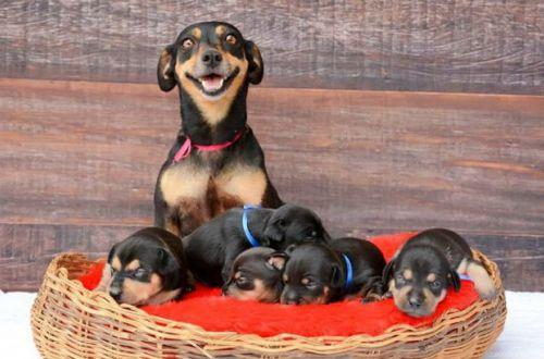 В продолжение темы: Да это просто самая фотогеничная собака-мама на свете