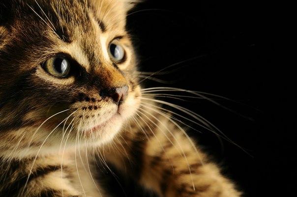 Обязанности кота по дому :)