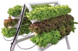 Hydroponics for you!!!!