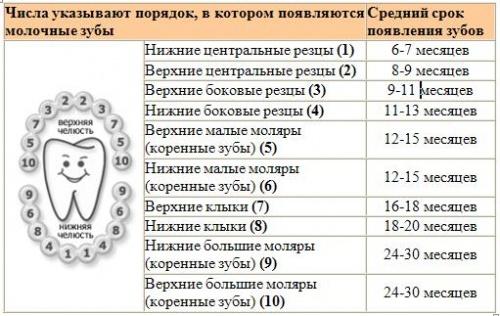 схема прорезывания молочных зубов детей