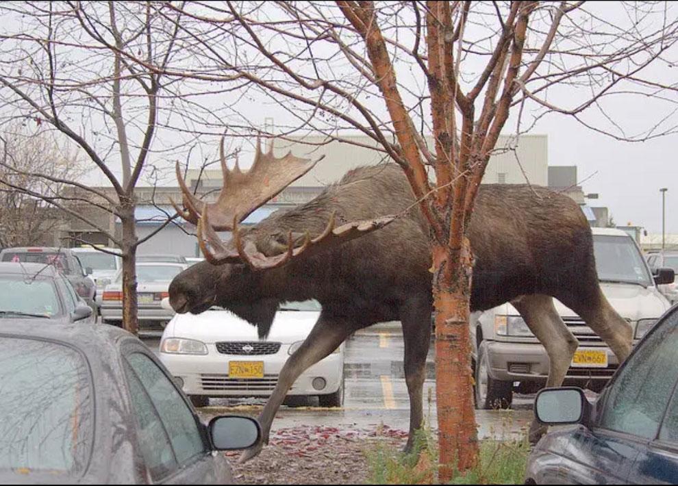 Большие животные и мы животные, большие, эмуКрокодильчикЛапа, когтиЛапа, казуара, черепахаЛапа, гигантскаяМорская, крыланТигрГусеница, автомобилейМолотоголовый, познаются, хорошо, орлаРазмеры, левКрокодильчикКогти, Ричардсони, слонКевин, улиткаСобачкаМорской, великГигантская, контрастовБизонВомбат, размеров, подборку
