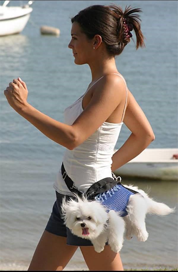 Поздравления новым, прикольные картинки прогулка с собакой
